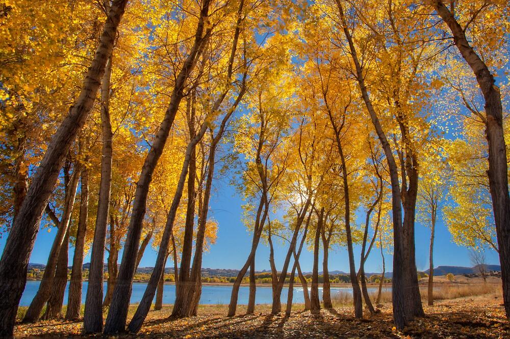 Skinny Fall - Wide by Bob Larson