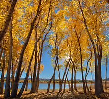 Skinny Fall - Wide by Bob Larson