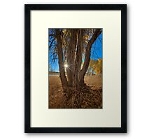 Tree Perspective 2 Framed Print