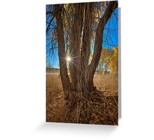 Tree Perspective 2 Greeting Card