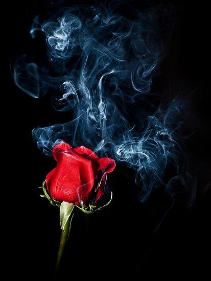 Smoky Rose by April Koehler