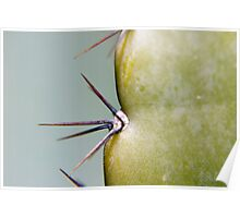 Cacti Spikes Poster