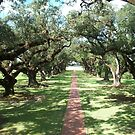 Alley of Oaks- Oak Alley Plantation by Forget-me-not