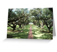 Alley of Oaks- Oak Alley Plantation Greeting Card