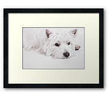 We love Westies Framed Print