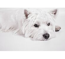 We love Westies Photographic Print
