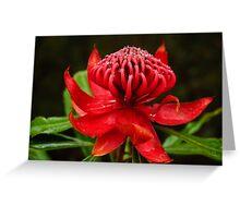Waratah - Telopea Speciosissima Greeting Card
