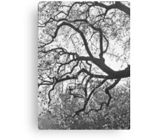 Blossoms In The Mist Canvas Print