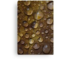 Fall Water Droplets Canvas Print