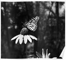 Butterfly, Cox Arbor. Dayton, Ohio 2012  Poster