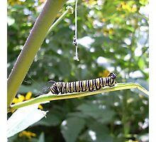 Another Caterpillar, Cox, Dayton, 2012 Photographic Print