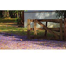 Jacaranda Gate Photographic Print