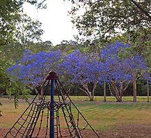 Jacaranda Playground by Fiona Allan Photography