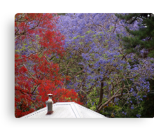 Jacaranda & Illawarra Flame Tree Canvas Print