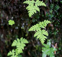 Ferns in the rain - France. by Picturestation