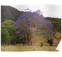 In the Paddock - Rural Jacaranda Poster