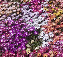 Colorific! by pjcrown