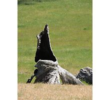 Stump & Beyond Photographic Print