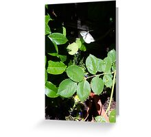 Cabbage Moth One - 11 11 12 Greeting Card