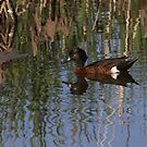 Mawson Lakes Duck by R-Summers