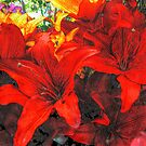 Deep Red Lilies For the Holidays by Jane Neill-Hancock