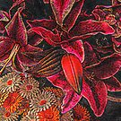Textured Lilies in Shades of Red by Jane Neill-Hancock
