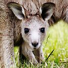 I have Eyes Only For You  ~ Joey Kangaroo ~ by Kym Bradley