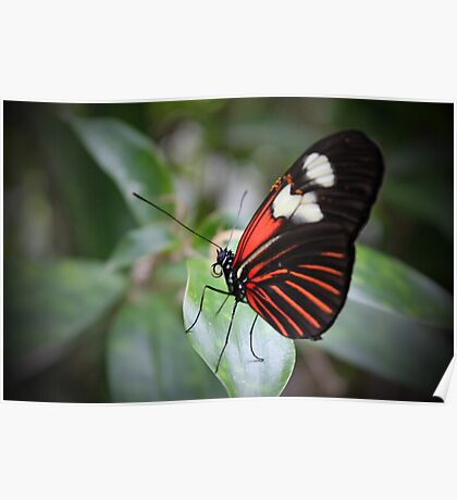 Butterfly Life Poster
