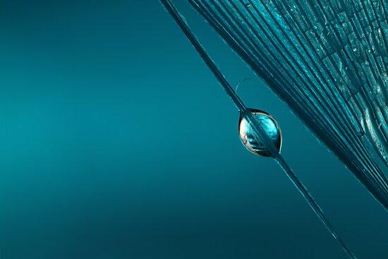 Blue by Sharon Johnstone