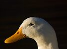 Pekin Duck by Nigel Bangert