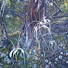 Spiders at Bullock Hills Dumbleyung by scallyart
