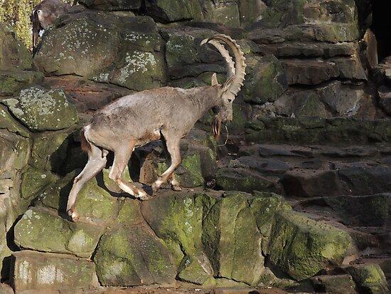 Mountain Goat by CreativeEm