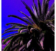 Palm Tree   by TCbyT