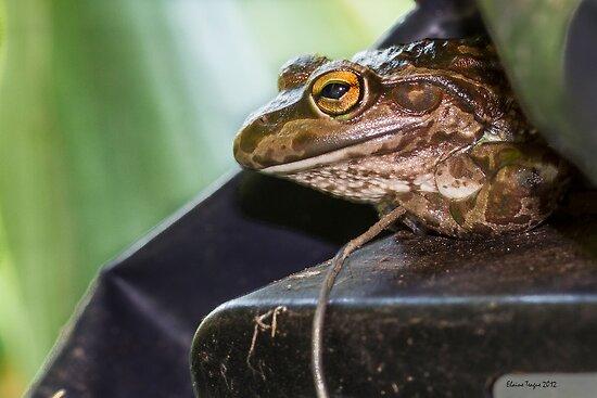 Inconvenient Frog by Elaine Teague