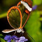 Wings of glass by AntonAlberts