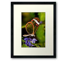 Wings of glass Framed Print