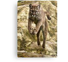 Leaping Puma Metal Print