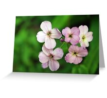 Cuckoo Flower Greeting Card