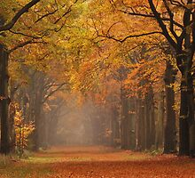 Autumnal highlight by jchanders