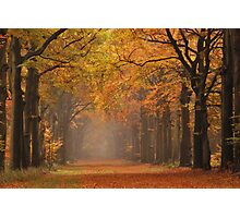 Autumnal highlight Photographic Print