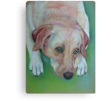 Luna the sweet Labrador Canvas Print