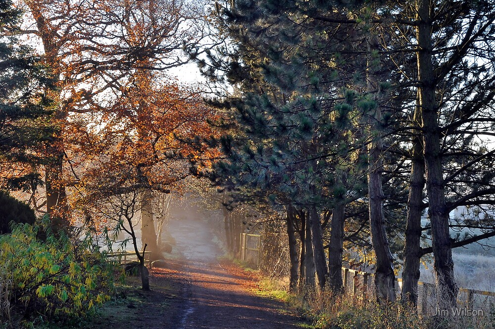 Morning Light,colour by Jim Wilson