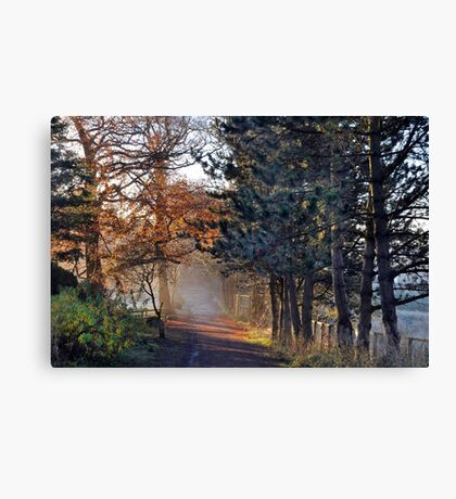 Morning Light,colour Canvas Print