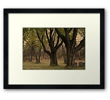 Tranquil Trees Framed Print