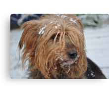 Skitsy in the snow! Canvas Print