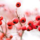 Kwanzaa Cherries - aka Winter cherries by Poete100