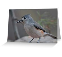 Tufted titmouse with a sunflower seed Greeting Card
