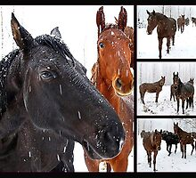 Horses in the snow. by axieflics