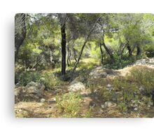 Greek forest Canvas Print