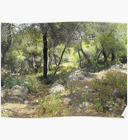 Greek forest Poster